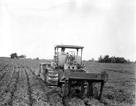File:Plowing Lines for Planting.jpg