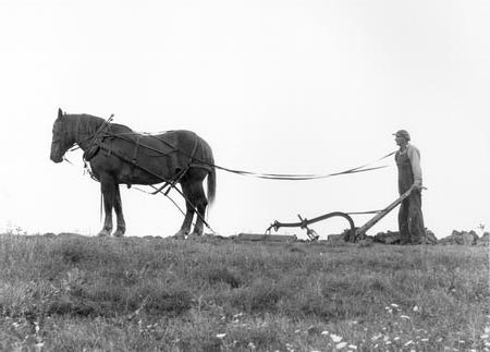 Farmer with Horse-Drawn Plow.jpg