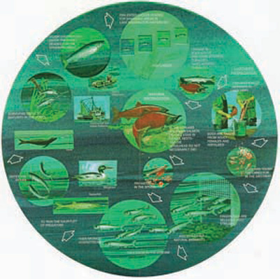 Anadromous Fish Life Cycle.jpg