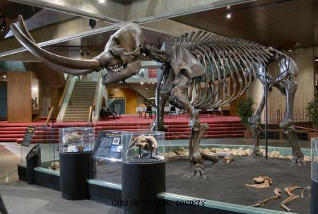 Conway Mastodon at Ohio Historical Center.jpg